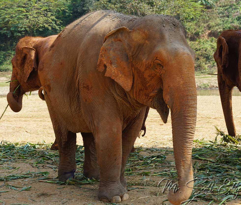 Visiting Elephant Nature Park in Chiang Mai, Thailand ...